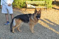 Първата площадка за кучета беше открита в Сливен