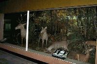 Природонаучният музей в Котел няма да работи от 2 до 7 май заради дезинсекция