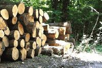 Сливен: Лица с увреждания, които не са в списъка за социално подпомагане, получават дърва за огрев на по-ниски цени