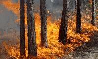 Спасиха от пожар 800 декара иглолистна гора край Кортен