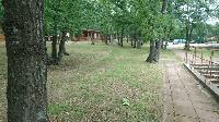 Санитарна сеч на болни дървета и сухи клони в Сливен
