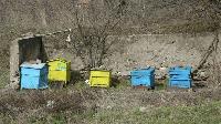 Стопанска постройка и пчелни кошери изгоряха при пожар в село Полско Пъдарево