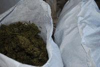 Помещение за отглеждане на марихуана е открито в сливенското село Крушаре