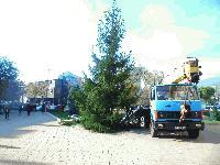 Коледната елха на Сливен вече е поставена пред Общината