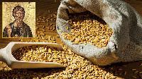 Андреевден e - денят започва да наедрява колкото едно просено зърно