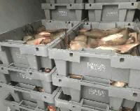 Хванаха бракониери с над 1 тон никулденска риба край Айтос
