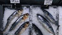 Инспектори в акция за Никулден: Прясна ли е рибата?