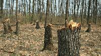 Извършени са над 200 хиляди проверки за незаконна сеч и нарушения в горите