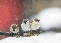 В края на февруари ни застига сибирски студ