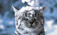Прогнозата за времето 26 февруари - 4 март:  Кратка зима, следващият уикенд - пролет