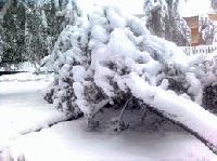 Премахнати са падналите от бурята дървета