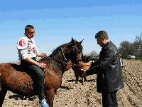Празник на коня и конния спорт в село Тенево