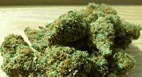 4 г. затвор за притежание на марихуана за 10 000 лв.