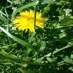 В Сливен: започва пръскане на тревните площи срещу кърлежи