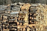 Община Сливен ще подпомогне хора с увреждания с по-евтини дърва за огрев