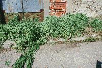 Криминалисти иззеха голямо количество канабис сливенското село Блатец