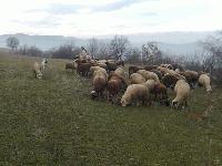 За броени часове служители от РУ- Стралджа разкриха кражба на животни