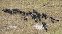 БАБХ: Ями за странични животински продукти да изградят ловните стопанства
