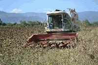 Жътвата на слънчогледа в Ямболска област ще приключи до края на седмицата