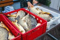 Започват проверки на рибата в цялата страна преди Никулден