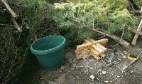 Продажба на елхи с незаконен произход установиха в Сливен