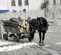 В Стралджа конфискуваха 10 каруци и 16 куб.м. незаконно придобити дърва за огрев