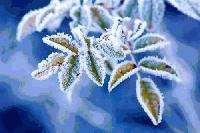 Снежно и студено начало на новата седмица