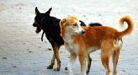 Зоополицията в Сливен издирва извършител,стрелял с въздушна пушка по куче