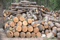 Община Болярово подсигурява навременната доставка на дърва за огрев със собствени дървосекачи