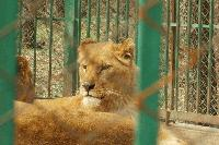"""Oбщина Хасково започва проверка в зоокът """"Кенана"""", след смъртта на новородени лъчвета"""