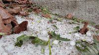 В Нова Загора свикаха комисия за щетите след градушката