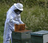 Важно за пчеларите: Пръскат с фунгициди в 7 местности в Ямбол