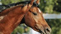 2 коня и 30 лева подкуп отведоха мъж в полицията