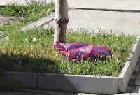 Полицията в Сливен издирва неизвестен, убил котка с малките й