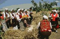В тунджанското село Търнава с народни обичаи ще започне жътвата на ечемика