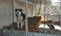 Община Сливен довършва изграждането на приют за бездомни животни