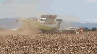Стартира жътвата на пшеница в сливенски регион