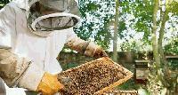 Честит празник на пчеларите!