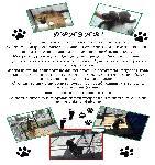 В Болярово започна кампания за осиновяване на кучета