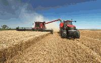 Покачват се добивите при пшеницата в ямболско