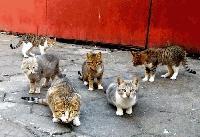 В Бургас храниш бездомна котка, отнасяш глоба от 100 лева