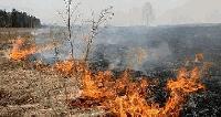 Жегата подпали 600 дка сухи треви край боляровското село Воден
