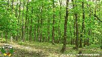 Нови планове за ловците и горите в Нова Загора