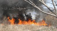 Пожар изпепели 800 дка храсти в Малко Шарково