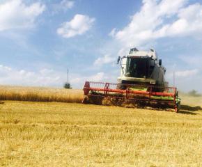 По-добри добиви отчитат при пшеницата