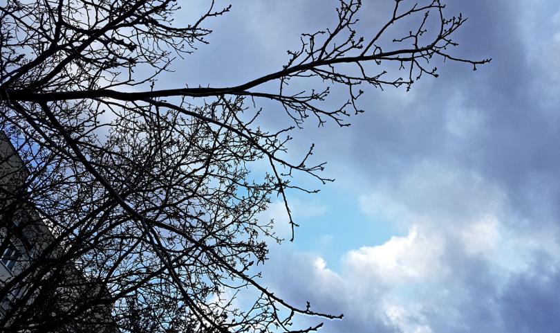 Днес в по-голямата част от страната ще бъде облачно, в много райони – мъгливо. Ще има и валежи от дъжд, главно в Южна България. Минималните температури...