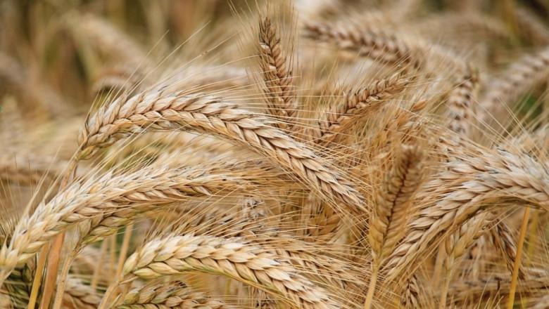 По-високи добиви при ечемика и пшеницата се очакват през тази година в Ямболска област в сравнение с миналогодишната реколта. Засега е добросъстоянието...