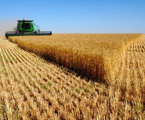 С по-високи добиви се поздравиха зърнопроизводителите в община Болярово