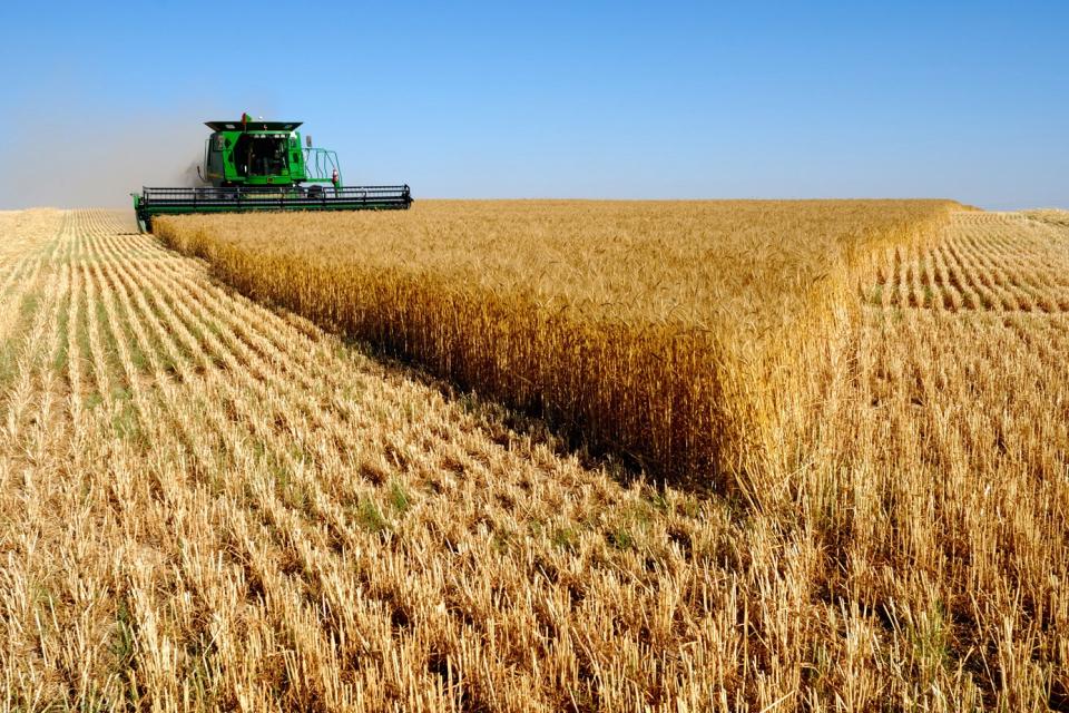 С около 30 процента са се повишили добивите на пшеница тази година, благодарение на предприетите агромероприятия от зърнопроизводителите, съобщи агрономът...