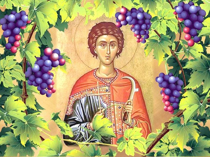 Свети мъченик Трифон е роден в Камсада, Фригия (Мала Азия) през 227. Земите се смятат за една от прародините на лозата и виното. Прочул се с лечителските...